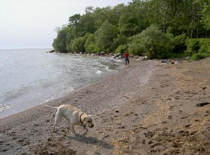Judi of Schindler's Fabrics with Lab Sadie  walking beach on Pelee Island in Erie Islands